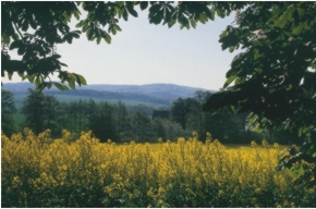 Wiehengebirge in der Rapsblüte